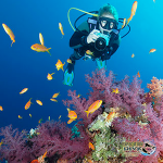 ExpeditionDive_Photographer