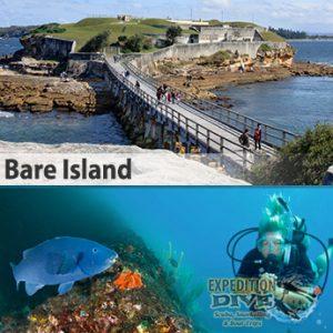 Sydney Marine Life - Bare Island - Blue Groper