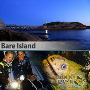 Sydney Marine Life - Bare Island - Night Dive - Eel