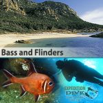 Sydney Marine Life - Bass and Flinders - Southern Roughy