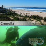 Sydney Marine Life - Cronulla - Boat Dive