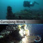 Sydney Marine Life - Currajong Wreck - Boat Dive