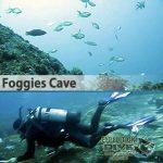Sydney Marine Life - Foggies Cave - Boat Dive