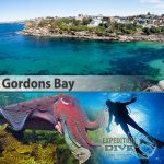 Sydney Marine Life - Gordons Bay - Giant Cuddle Fish