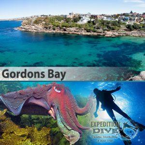 Sydney Marine Life - Gordons Bay - Giant Cuddle Fish