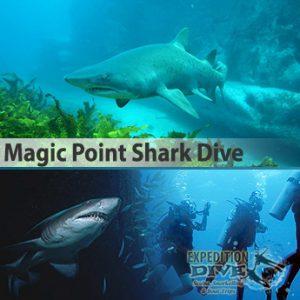 Sydney Marine Life – Magic Point Shark Dive – Grey Nurse Shark