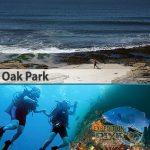 Sydney Marine Life - Oak Park - Blue Groper