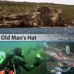 Sydney Marine Life - Old Man's Hat - Boat Dive