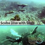 Sydney Marine Life - Scuba Diving with Seals - Boat Dive