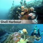 Sydney Marine Life - Shell Harbour - Boat Dive