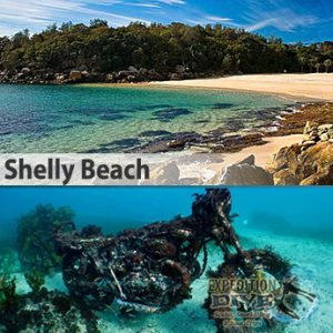 Sydney Marine Life - Shelly Beach - Motorbike