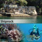 Sydney Marine Life - Shiprock - Leatherjacket