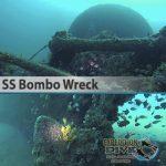 Sydney Marine Life - SS Bombo Wreck - Boat Dive