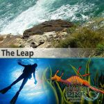 Sydney Marine Life - The Leap - Weedy Sea Dragon