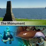 Sydney Marine Life - The Monument - Whipray