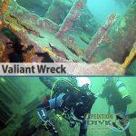 Sydney Marine Life - Valiant Wreck - Boat Dive
