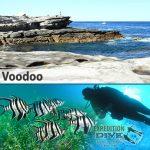 Sydney Marine Life - Voodoo - Old Wife