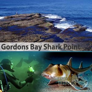 Sydney Marine Life - Gordons Bay Shark Point - Port Jackson Sharks